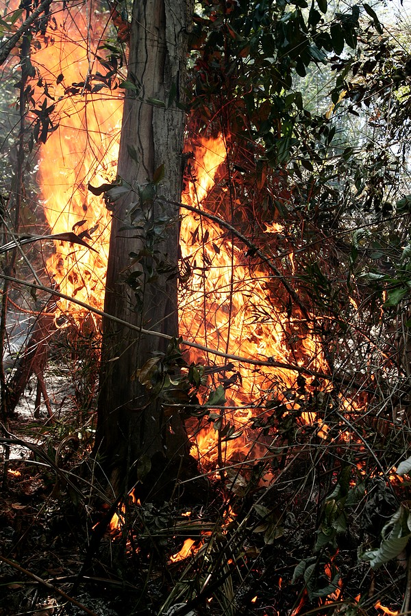 Prado, Bahia / Brazil - November 21, 2011: Forest Fire Is Seen In A Park In The City Of Prado, South