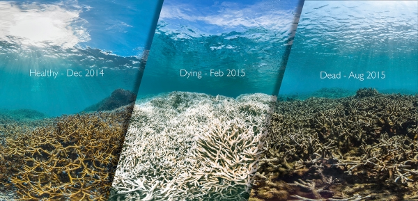 Acidic Seas: How Carbon Dioxide Is Changing the Oceans - American Chemical Society