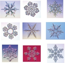 Nine photographs of snowflakes