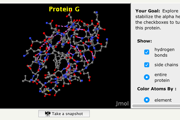 four-levels-protein-structure