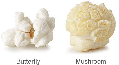 Buterfly and Mushroom types of popcorn
