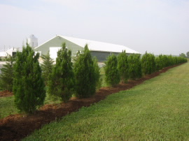 Trees kill odors and other emissions from poultry farms - American