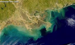 dead zone (hypoxia) in the Gulf of Mexico