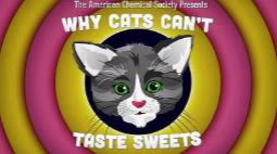Screenshot of American Chemical Society video explaining why cats lack a sweet tooth