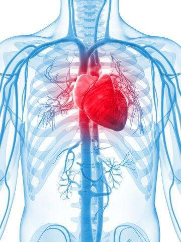 Building Heart Tissue That Beats American Chemical Society