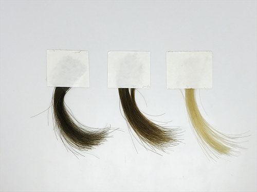 samples of hair dyed with synthetic melanin
