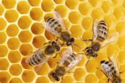 queen bee or worker bee new insights into famous honeybee society