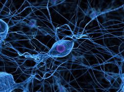 Nerve cells in the brain