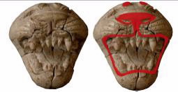 Ancient Phoenician ivory, lion head carvings