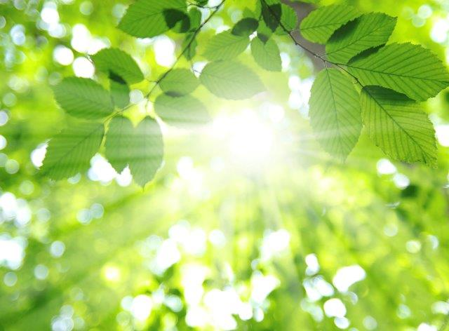 leaves and sunlight