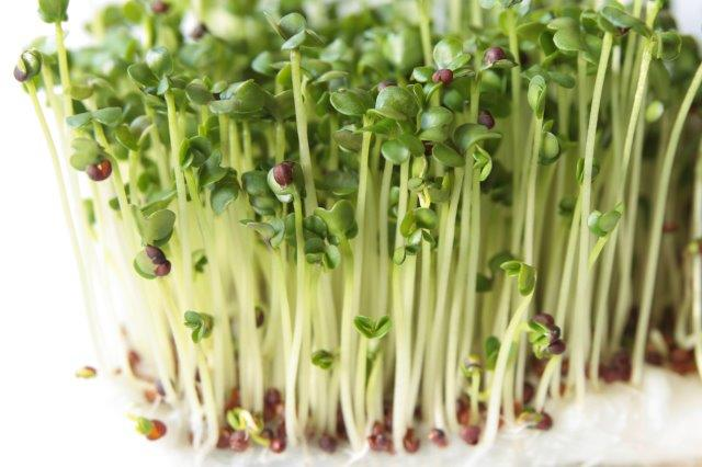 Broccoli Sprouts: One of Nature's Top Cancer-Fighting ...
