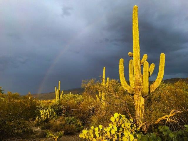 cactus roots inspire creation of water retaining material american