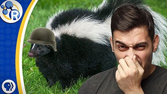 How to Get Rid of Skunk Smell image