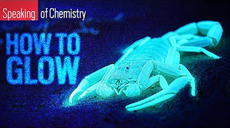 How do some animals glow? — Speaking of Chemistry image