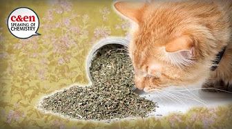 what-is-catnip-really  — Speaking of Chemistry image