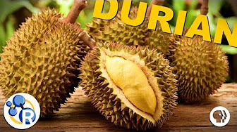 The Smell of Durian Explained image