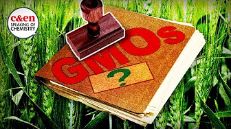 How GMOs are regulated… or not—Speaking of Chemistry image