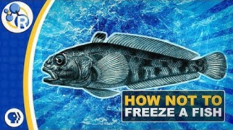 Why Don't Antarctic Fish Freeze to Death? image