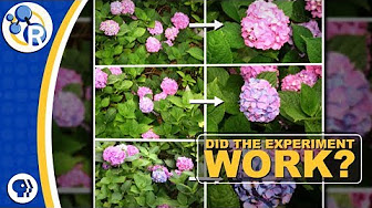 Hydrangeas and the Science of Do-Overs image