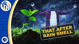 What's That After-Rain Smell Made Of? image
