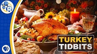 Thanksgiving Turkey Compilation image