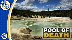 Yellowstone Steaming Acid Pools of Death image