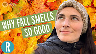 Why Do We Love The Smell of Fall? image